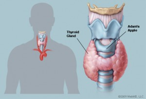 thyroidis