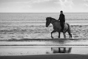 Άλογο και ανθρώπινη ψυχολογία