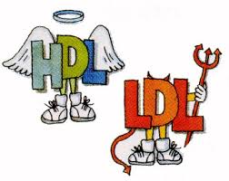 hdl-ldl