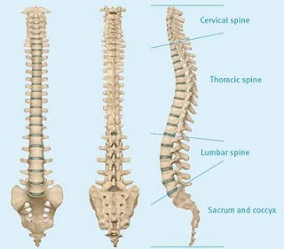 spondyloarthritida