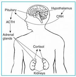 Ανεπάρκεια των επινεφριδίων (Νόσος του Addison)