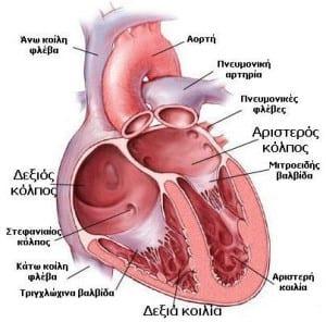 kardiastef