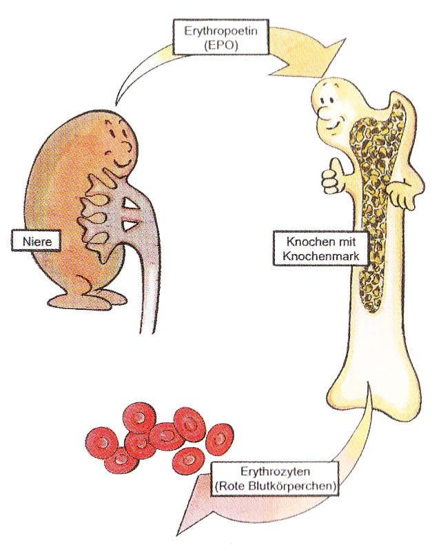 Χρόνια νεφρική ανεπάρκεια και αναιμία