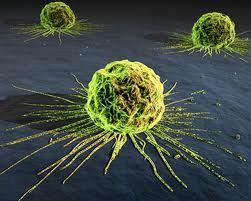Η τυχαία ανακάλυψη που μπορεί να θεραπεύσει όλους τους καρκίνους