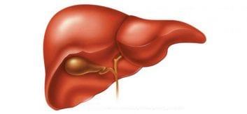 Ο συνδυασμός Χολίνης και Prunus Mume (ουρσολικό και ολεανολικό οξύ) βοηθά στην αντιμετώπιση του λιπώδους ήπατος