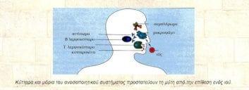 Η λειτουργία του ανοσοποιητικού συστήματος