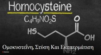 Ομοκυστεΐνη, Στύση Και Εκσπερμάτιση